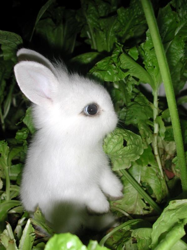 A White Baby Rabbit In Garden